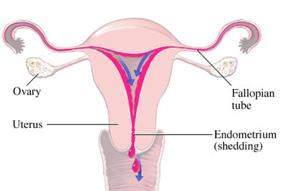 dolor-menstrual0